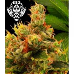 G13-Blueberry-Gum-500x500.jpg