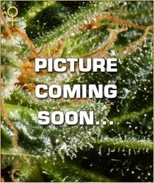1picture-soon.jpg