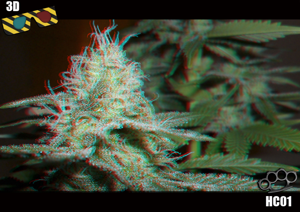 3d Cannabis Art Chill Out Lounge Strain Hunters Forum