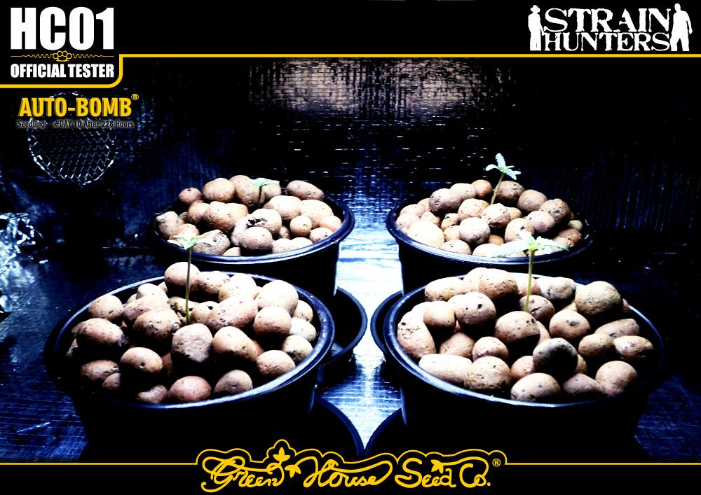 gallery_10519_159_233585.jpg