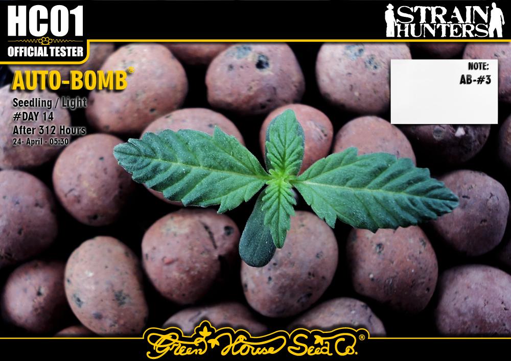 Auto-Bomb 2