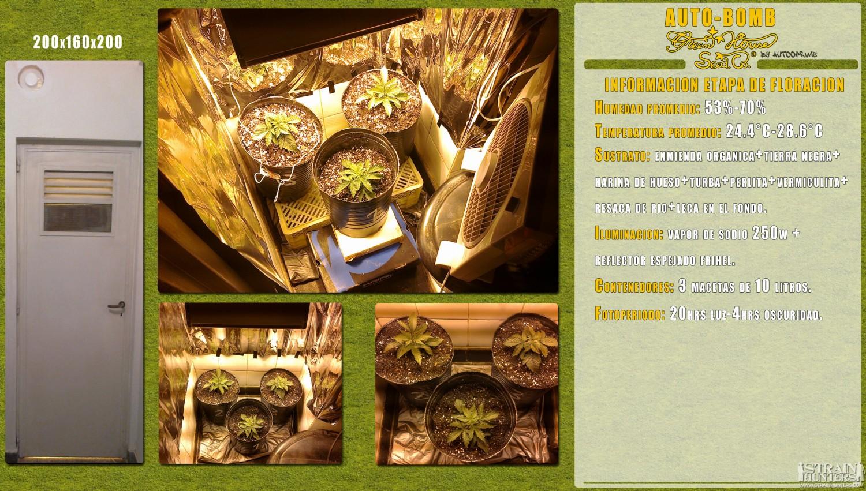 gallery_10166_392_1414355.jpg