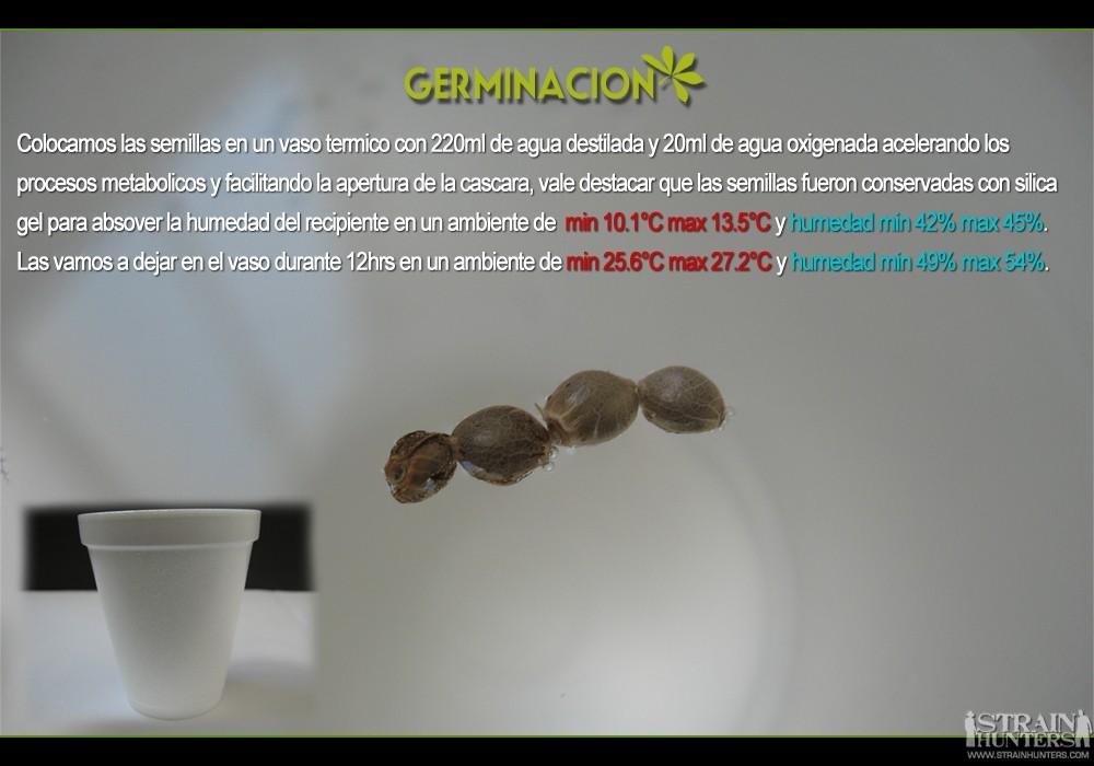 gallery_10166_601_28883.jpg