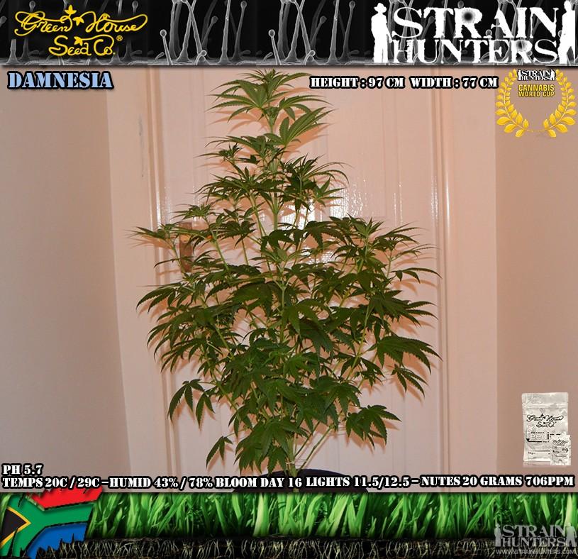 gallery_9029_854_244068.jpg