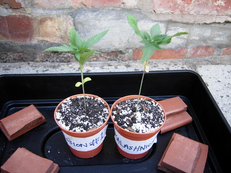 06june-2016-seedlings.jpg