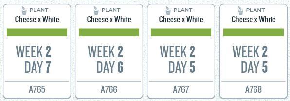 week02_plants.jpg