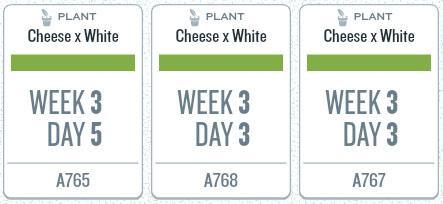 week03plants.jpg
