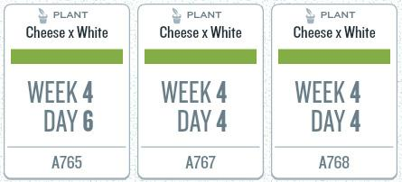 week04_plants.jpg