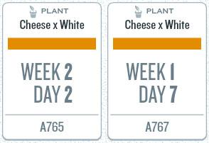 week06_plants.jpg