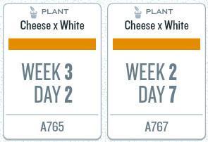 week07_plants.jpg