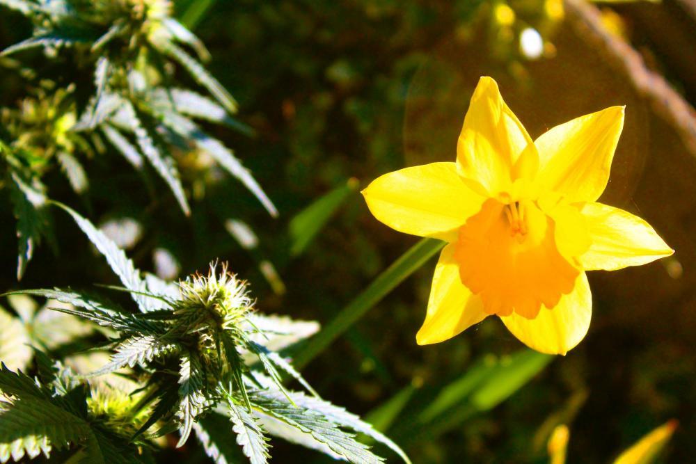 Flower&bud_2586.jpg
