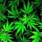 irollwithcannabis