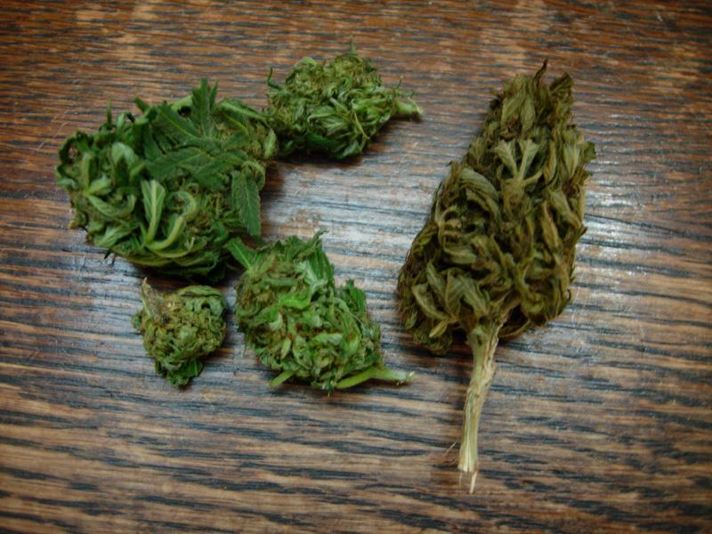 14september-2017-passion#1_leafy_plant_bud_quick_drying.jpg