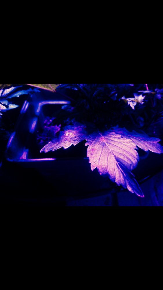 Screenshot_2018-03-17-17-10-50.png