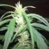 Nutes - AutoBomb Test x 4 - Indoor - 20/03/2012 - last post by milostone