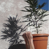 Expo Grow Mar del Plata 2012 Argentina - last post by miwell