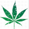 Investing in Marijuana - last post by smokerblazer