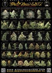 newadvert All strains