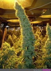 Nice grow room.