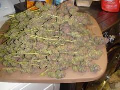 Some nice dried buds.