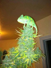 Nice plant.