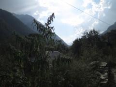 wild jungli