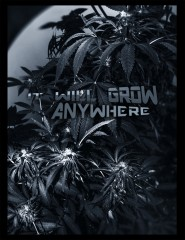 Grows anywhere they saY