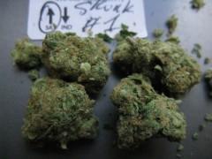 dried bud pics