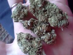 Some buds...
