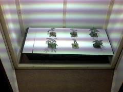 First hydroponics from back in the day