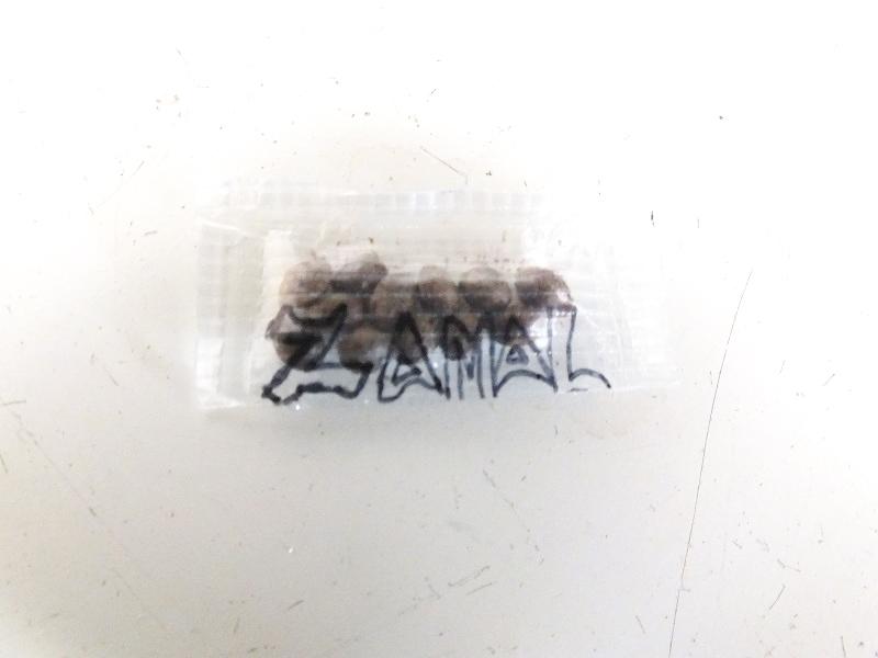 Zamal (la reunion island)