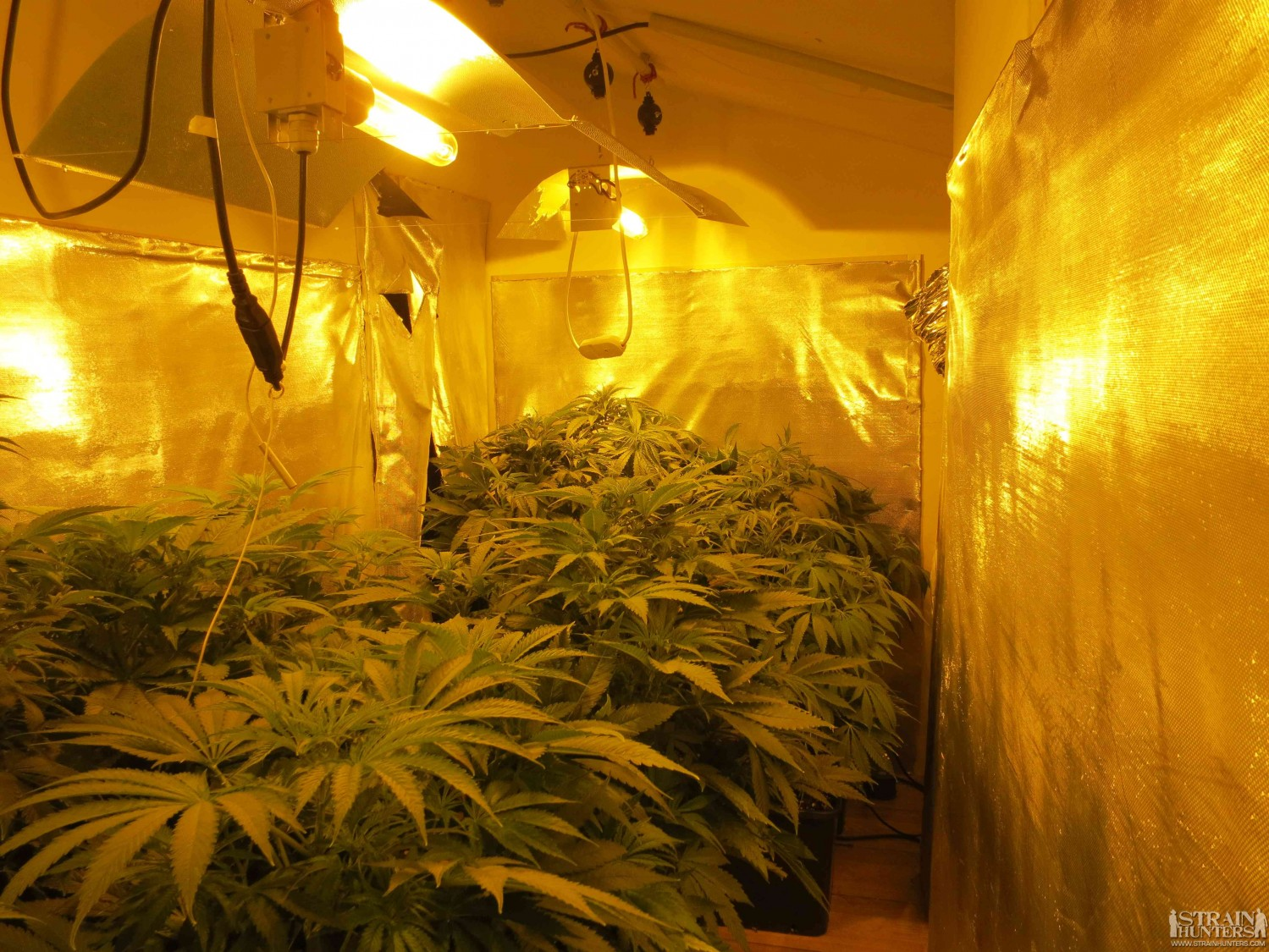 3x400 Grow Room design by LemonJack420