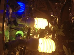 cfl lights imusing, 2 x phillops 42 watt, one smaller green, and one smaller blue all together 420 watts lol