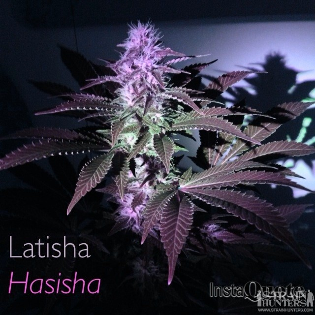 My second white widow named Latisha