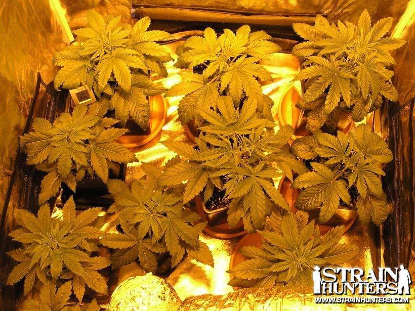 post-8834-0-60068100-1330773295_thumb.jp