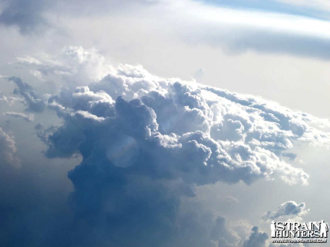 post-8644-0-69062000-1333658917_thumb.jp