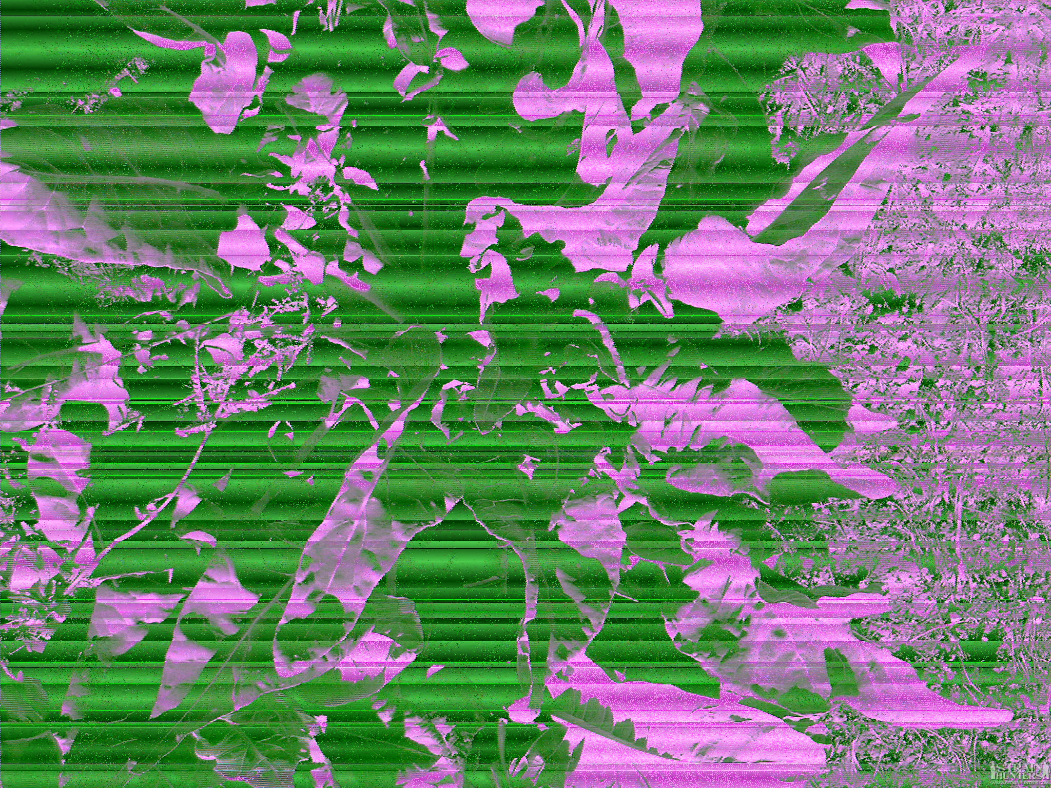 post-22150-0-60683100-1382291800.jpg