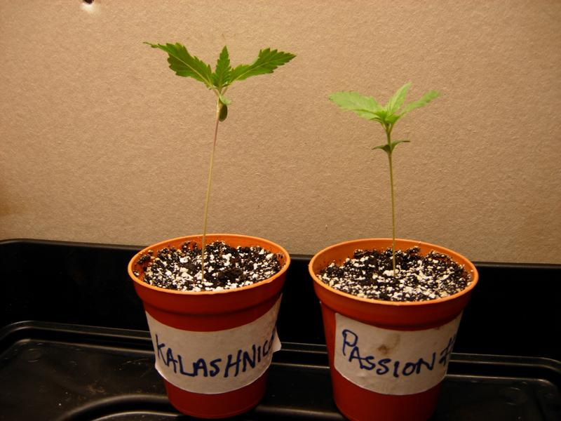 31may_seedlings.jpg