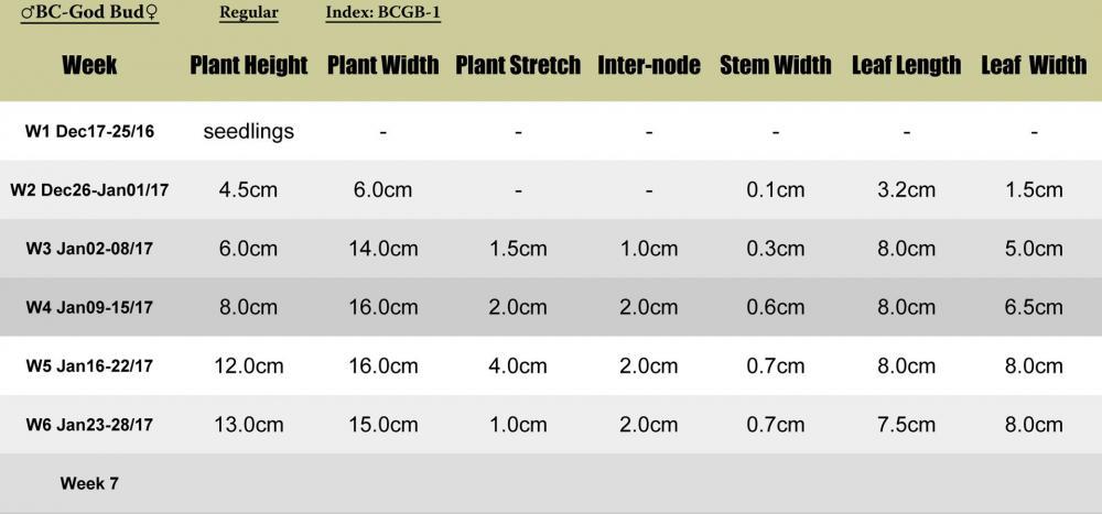 BCgodbud-BCGB1-plant-stats.jpg