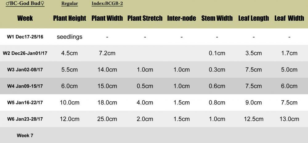 BCgodbud-BCGB2-plant-stats.jpg