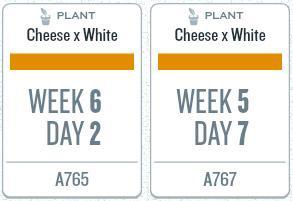 week10_plants.jpg
