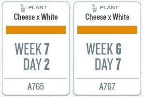 week11_plants.jpg