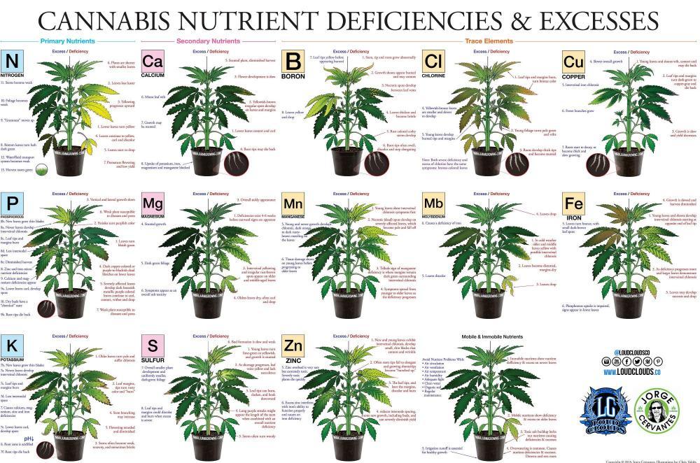 Leaf_Deficiency.jpg