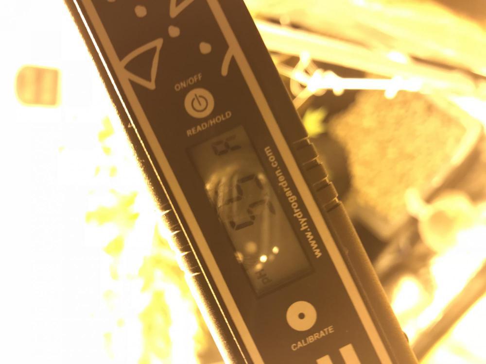 D57A29A3-8EBE-4A66-9C1B-A9E205632FC3.jpeg