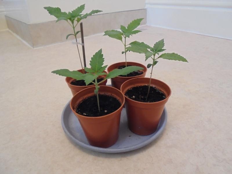 16sept-2018-seedlings-normal-light.jpg
