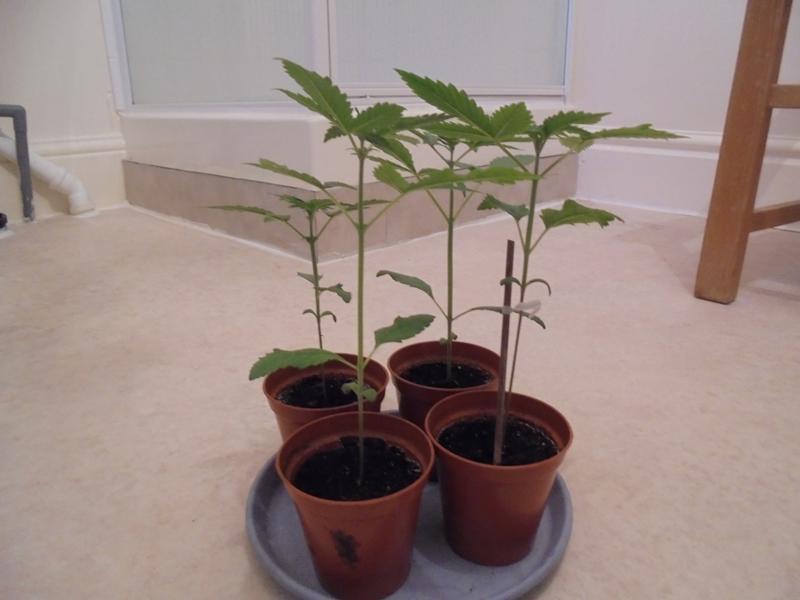 22sept-2018-seedlings-normal-light.jpg