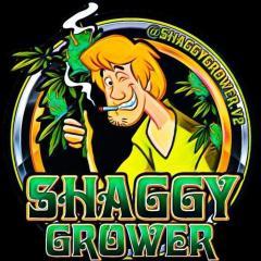 ShaggyGrower