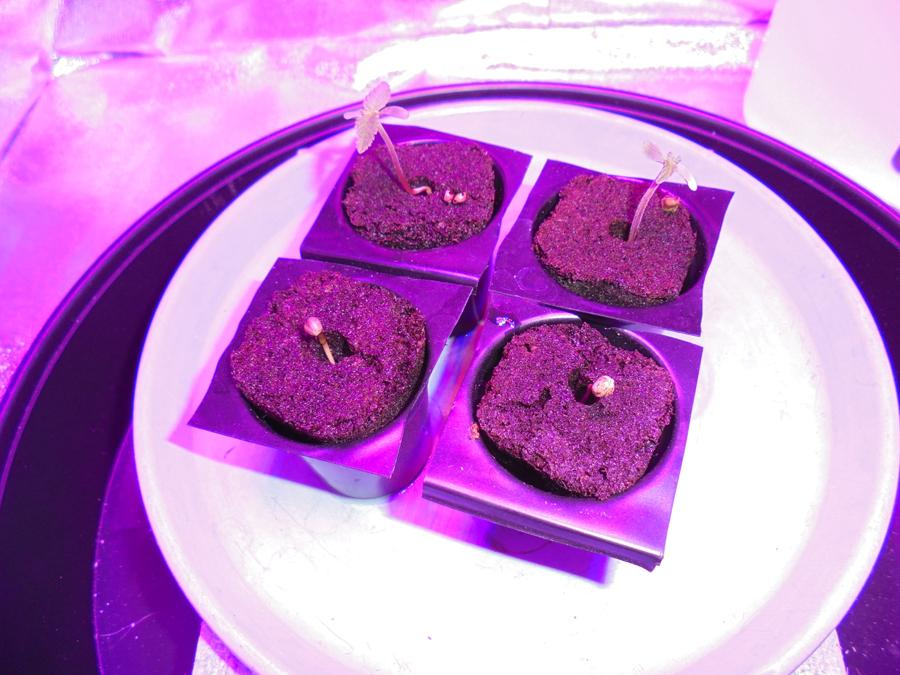 24feb-2019-seedlings-two-cast-seed-shells.jpg