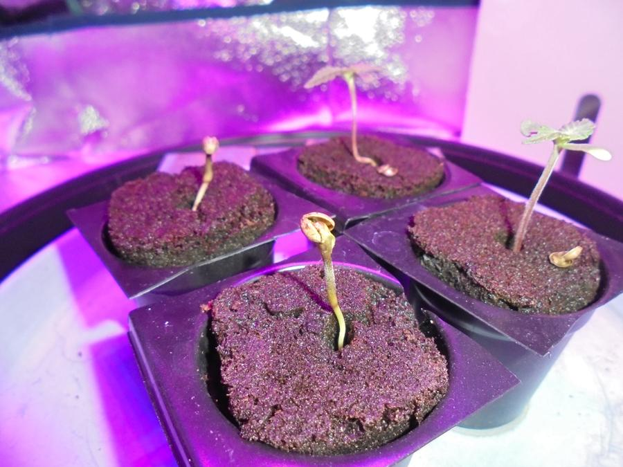 25feb-2019-seedlings-third-casting-seed-shell.jpg