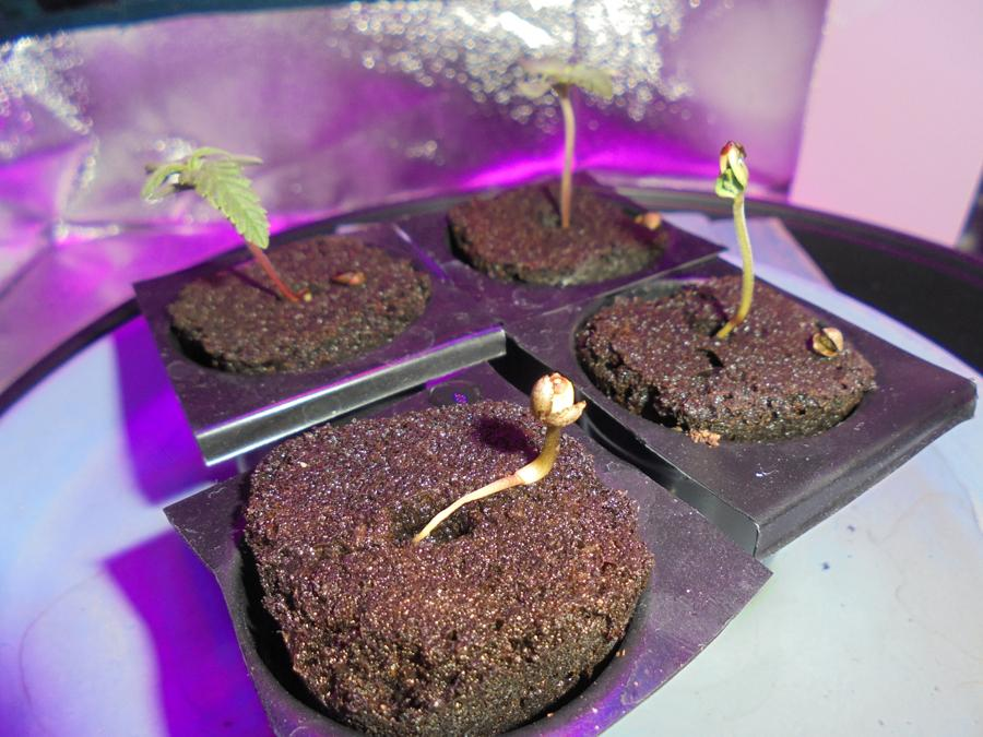 26feb-2019-seedlings-fourth-casting-seed-shell.jpg